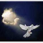 esprit-saint-colombe