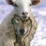 jeviensbientot - false prophet