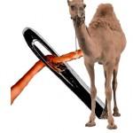 jeviensbientot - camel