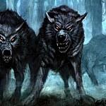 jeviensbientot - loups